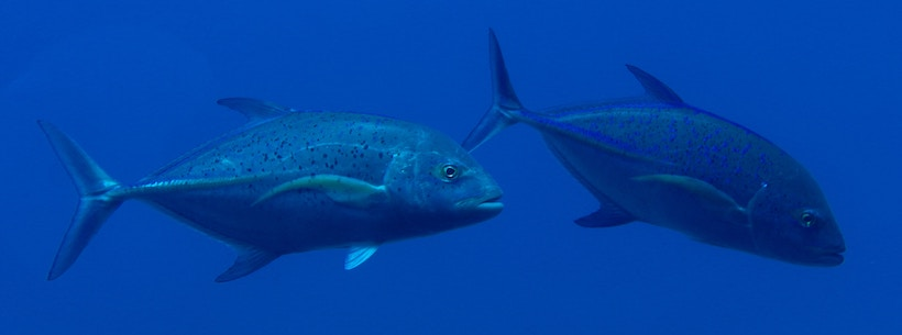 Picture of 2 fish