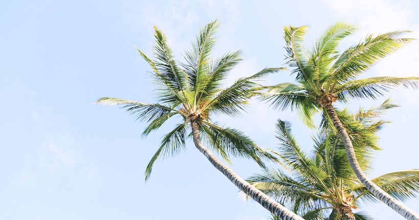 Overhead palm trees with coconuts