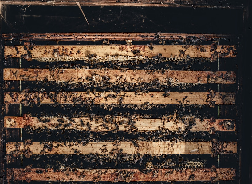 A crate full of swarming honeybees
