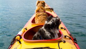 2 dogs in a kayak on the water