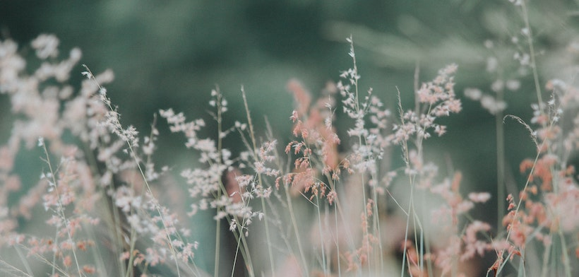 Tall grasses with flowers